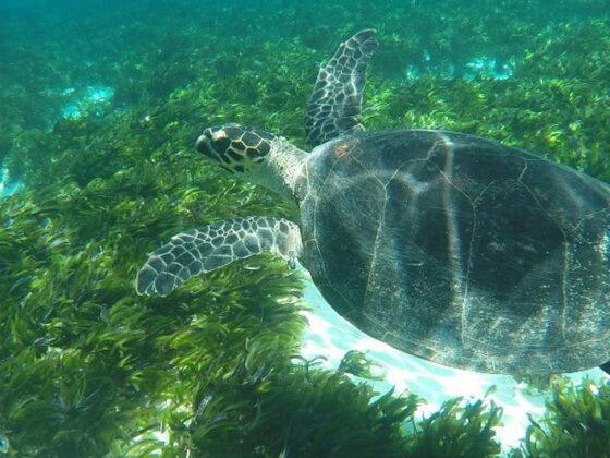 Seychelles-turtle