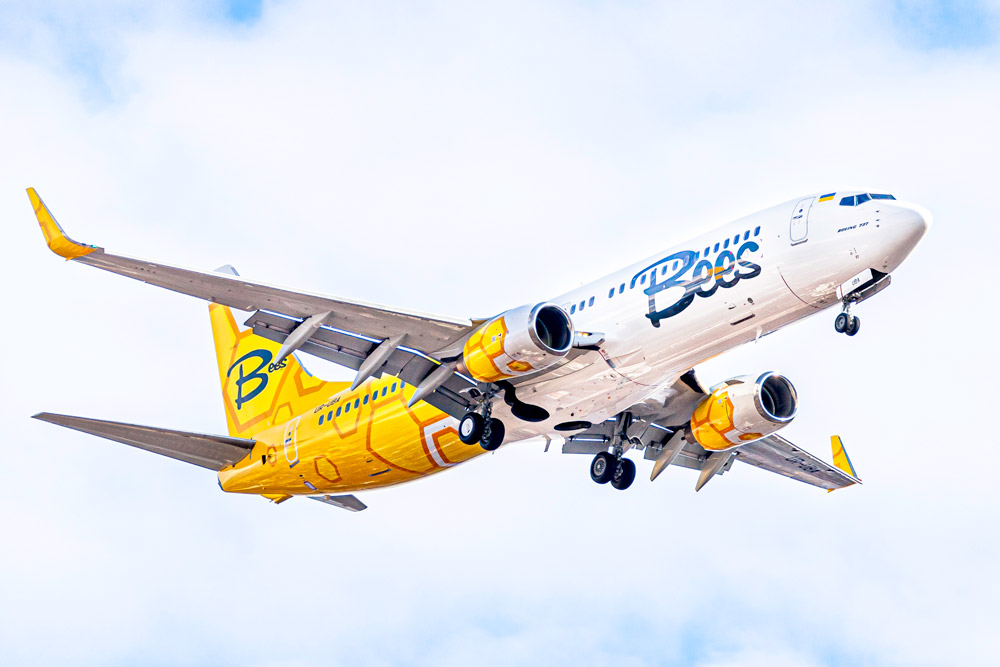 bees_airline